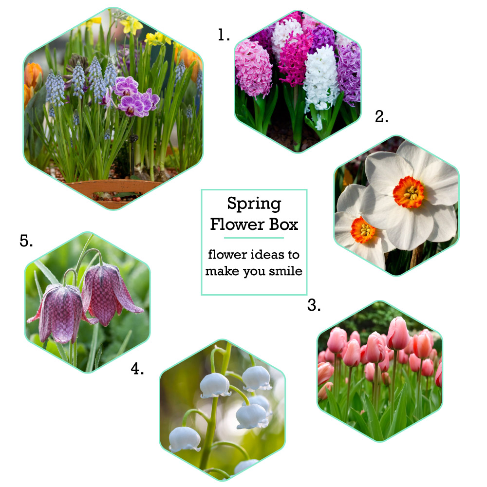 Colourful spring flower ideas