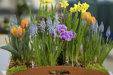 Colourful spring flowers box.